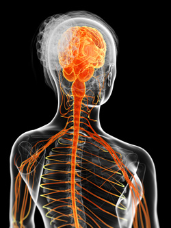 Nervous system damage lawsuits